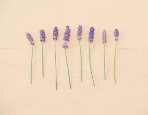 lavender on pink blush background