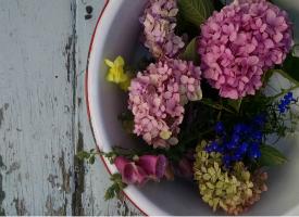 hydrangeasandflowers