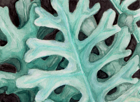 dusty miller watercolor painting
